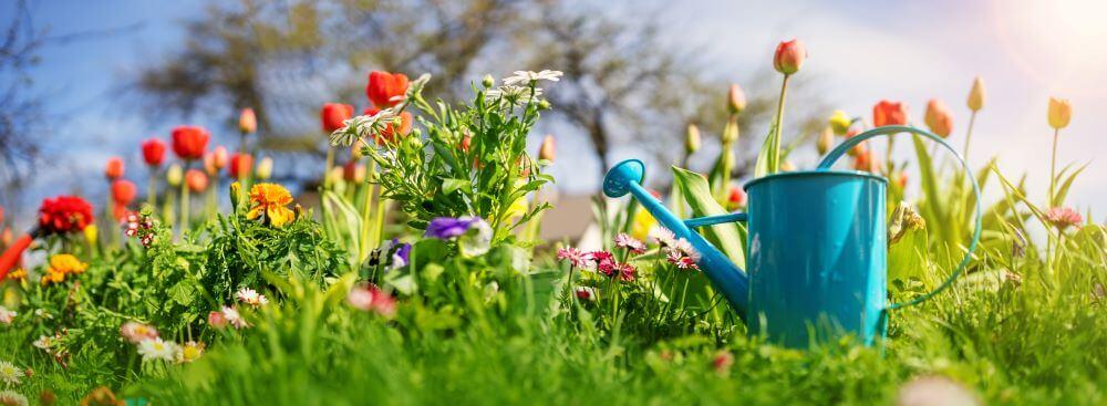 Обработка сада весной